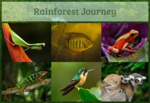 Rainforest Journey_6-Animal-Types-Collage-HR-1-3_zpsblucxlp3