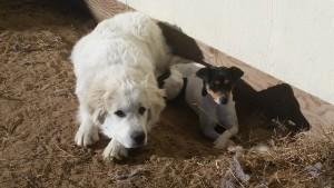 Samson and Pepper